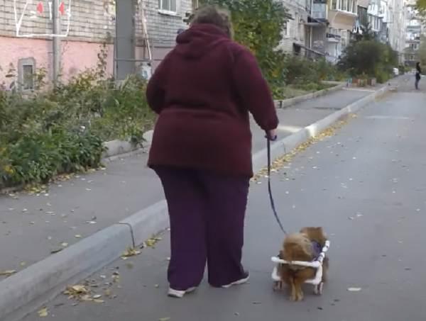 Девушка мастерит коляски для собак-инвалидов